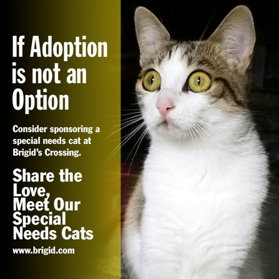 Sponsor a cat with special needs